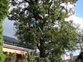Лечение деревьев летом 2012 года