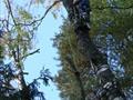 Удаление деревьев по частям с вывешиванием