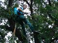Лечение деревьев опрыскиванием