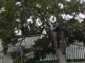 Удаление аварийного дерева