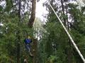 Удаление деревьев с помощью специальной техники