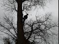 Удаление деревьев дачный поселок Удельная