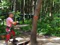 Дерево падает в заданном направлении