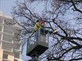 Спиливание деревьев с использованием спецтехники
