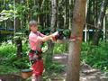 На стволе дерева делается запил 1