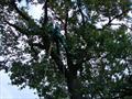 Альпинист опрыскивает дерево