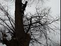 Удаление деревьев Раменский район
