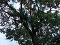 Опрыскивание деревьев промышленным альпинистом