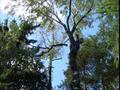 Удаление деревьев со сбрасыванием веток