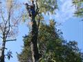 Удаление деревьев частями с вывешиванием